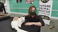 Humane Animal Rescue Of Pittsburgh Looking For Homes For Lots Of Great Pets