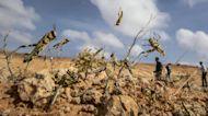 Huge locust outbreak in East Africa reaches vulnerable South Sudan