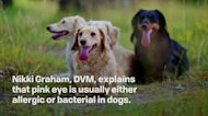 Canine Conjunctivitis: How to Recognize and Treat Pink Eye in Dogs