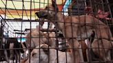 He was a Hollywood darling for fighting dog meat trade. Butchers say he staged killings; he denies it