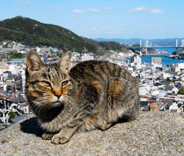 觀光船玩瀨戶內海 廣島與愛媛必玩景點與行程推薦