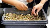 Ammunition shortage impacting law enforcement, recreational shooters, hunters