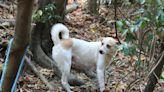 遊蕩犬貓逐年增 野生動物傷亡、染病 為生存上演「互相傷害」