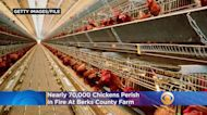 Nearly 70,000 Chickens Killed In Fire At Pennsylvania Farm