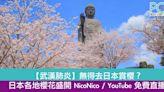 【武漢肺炎】無得去賞櫻?日本各地櫻花盛開 NicoNico / YouTube 免費直播