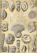 Marine microorganisms