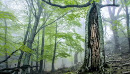 Climate change: Human activity makes forests emit carbon