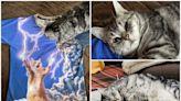 日本貓界終極大戰 貓奴分享圖Twitter熱傳 | GameOver HK