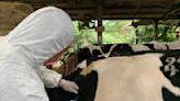 防牛結節疹擴散進口18萬劑疫苗!農委會:預計4/22抵台