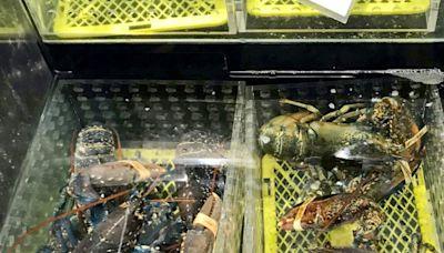 海關檢逾220噸走私澳洲龍蝦值1.8億元 拘7人