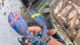 遇見200萬分之一 美漁民捕獲罕見藍色龍蝦 憐惜放回大海