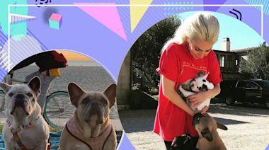 Lady GaGa愛犬被救回 綁匪仍然在逃