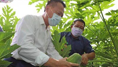 智慧科技栽植木瓜 翁縣長訪視悠沃農場