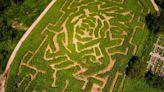 秋季親子活動 挑戰紐約市唯一玉米迷宮