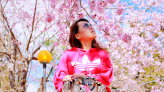 桃園復興 拉拉山恩愛農場,每年必追的粉色櫻花季,彷彿置身在日本!