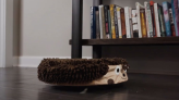 Turn your robotic vacuum into a cleaning pal with these cute covers