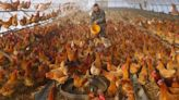 Rise in human bird flu cases in China shows risk of fast-changing variants: experts
