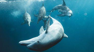 鯨豚調查局:有科學證據,才能理性討論鯨豚保育——專訪臺灣大學獸醫學院楊瑋誠教授 - 國家地理雜誌中文網