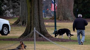 Biden's 'First Dogs' Champ and Major arrive at White House