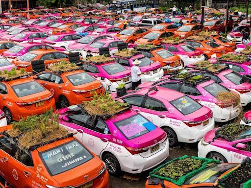 疫情重創泰國出租車業 數百輛出租車車頂搖身變「菜園」