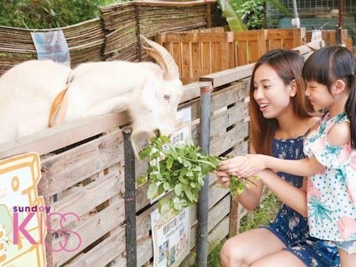 新界7大假日親子農場最新推介 採蜂蜜+親親羊駝+滑草場+耕種體驗|親子好去處 | 親子好去處 | Sundaykiss 香港親子育兒資訊共享平台