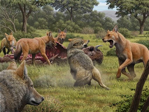 Prehistoric dire wolves looked different than those on 'Game of Thrones,' study suggests