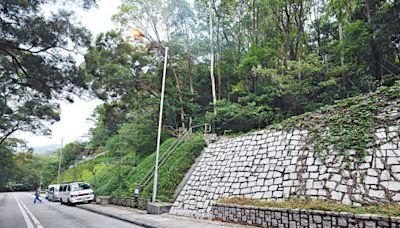 大嶼山「自駕遊」配額擬明年次季增至50個