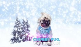 Doug the Pug's Frozen Parody Swaps 'Let It Go' with 'Chubby Pug' — and It's Adorable