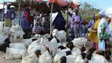 Restricted Hajj hits Somalia's livestock economy