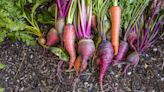 Here's How to Plant a Vegetable Garden for the Fall