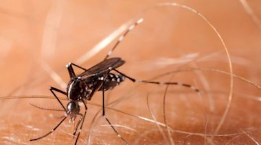 There's a case of dengue fever in the Keys, health officials say