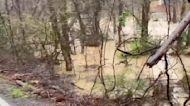 'Plenty of Rain Is Still Left': No Respite in Alabama Flooding