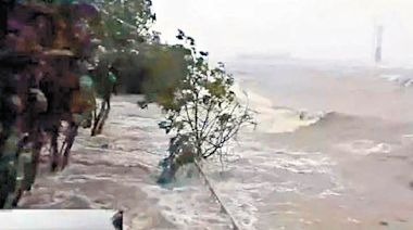 風暴下仍不倒 小樹被稱樹堅強 - 東方日報