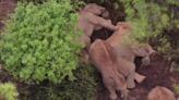 象群持續在玉溪市易門縣小範圍迂迴活動   博客文章