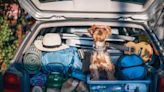 Dogs on the road, in the air and in hotels: What to know before your pack your pet