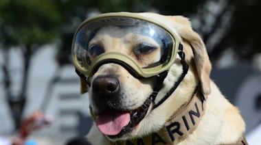 Frida the Rescue Dog Retires from Mexican Navy