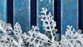 耶誕節超應景!推薦9種夢幻銀色觀葉植物
