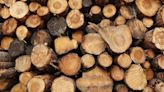 Lumber Prices Are FINALLY Falling. Here's Why—and What It Means for You.