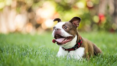Signs of Lyme Disease in Dogs and How to Prevent This Tick-Borne Illness