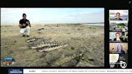 Tijuana River sewage issues impacting South Bay worsen