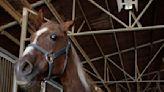 Council Keeps Focus on Future Equestrian Facility | The Capistrano Dispatch