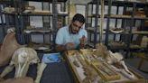 水陸兩棲!4300萬年的鯨魚祖先能在陸上生活 埃及考古團隊發現四足鯨魚化石
