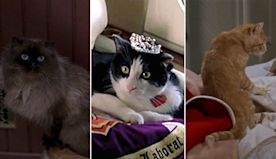 10 Scene-Stealing Cats in Movies and TV (Photos)