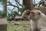 中頒布「禁野外動物交易」 美「實驗猴」不足...疫苗研發恐卡關