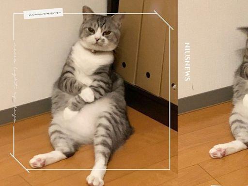 胖貓貓窩角落度估,模樣激似「強忍疫苗副作用」,網:根本是打完疫苗的me | 寵物圈圈 | 妞新聞 niusnews