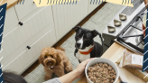 The Best Customized Dog Food for Picky Pooches