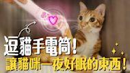 在蝦皮上買的逗貓手電筒!想不到貓咪晚上一夜好眠!| 吉妮普莉Cats Life