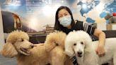 【珍言真語】寵物移民顧問Jennie Ho:移民不棄養 港人不惜包私人飛機走