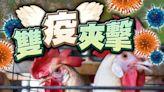 印度30地區爆H5N1及H5N8禽流感 港停進口禽類產品