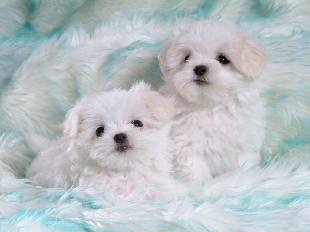 Cute White Puppies | In Photos